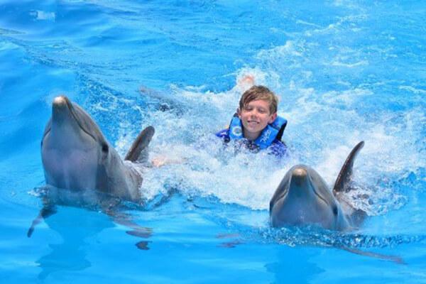 delfin-galery2