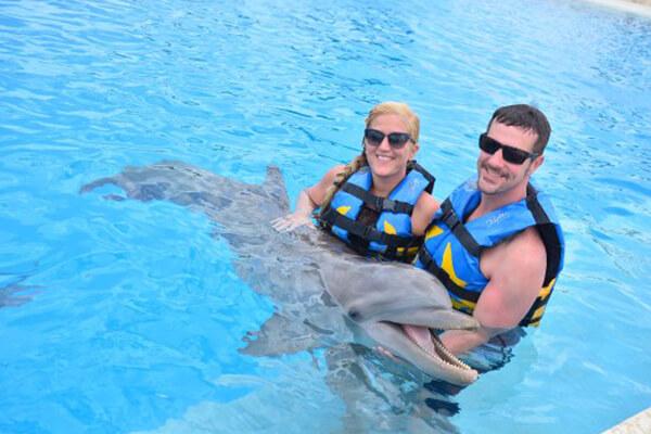 delfin-galery3